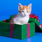 Kitten In Gift Box by printscapes