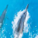 Spinner Dolphins Gliding through Hawaiian Waters by printscapes