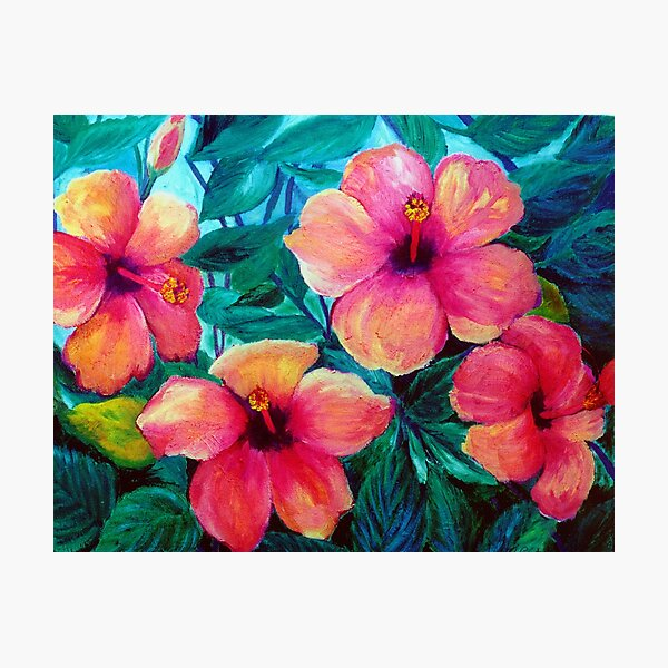 Hibiscus - Image to bring in nature Photographic Print