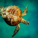 Whitsunday turtle by Geraldine Lefoe
