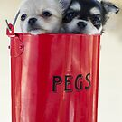 Pegged the pups  by Thow's Photography