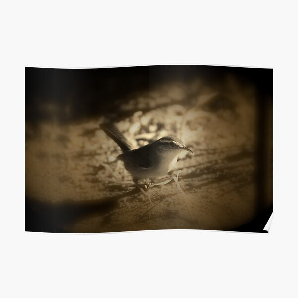 Beswick's Wren in Sienna Poster