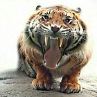 ..an angry Tiger ready to jump you...               [FEATURED] by John44