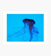 Jellfish in Blue Art Print