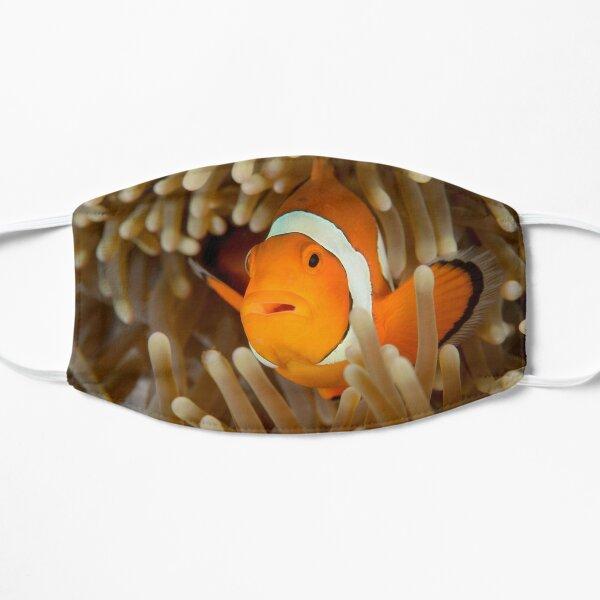 False Clown Anemonefish - Amphiprion ocellaris Flat Mask