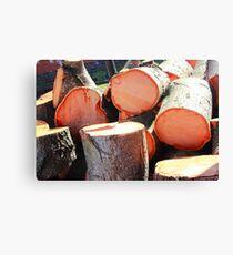 Tree Slices Canvas Print