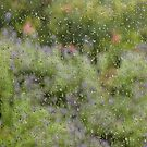 Garden flowers through rain spattered flyscreen by DBigwood