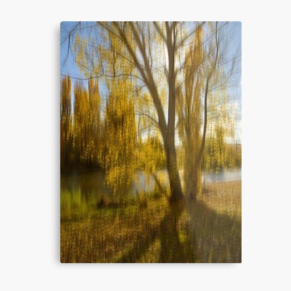 Gum tree by the Snowy River, Snowy Mountains, Australia Metal Print