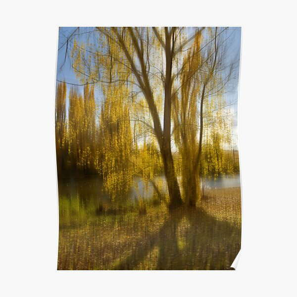 Gum tree by the Snowy River, Snowy Mountains, Australia Poster