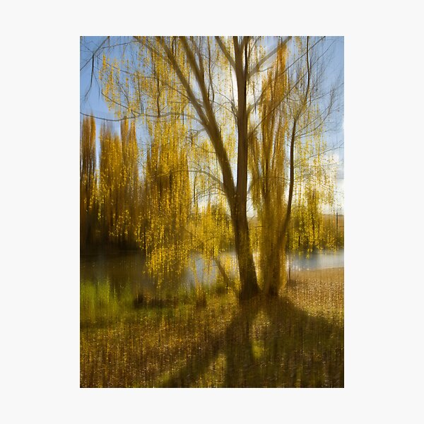 Gum tree by the Snowy River, Snowy Mountains, Australia Photographic Print