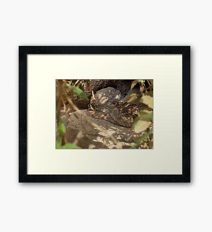 Western Diamond-backed Rattlesnake Framed Print
