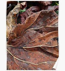 Fallen Leaf 1 Poster