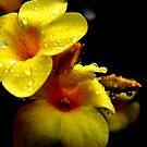 Floral by Vivek George Koshy