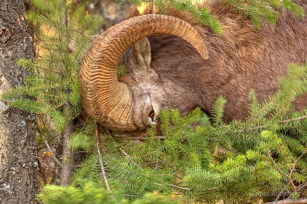 Logging...the Ram way by James Anderson