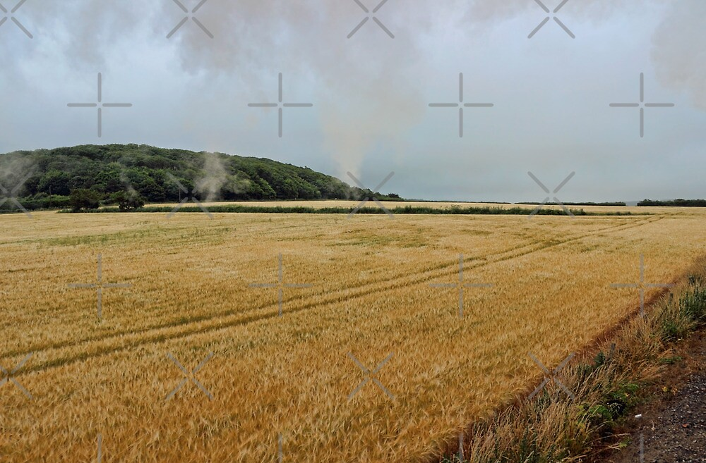 Countryside from a steam train by Avril Harris