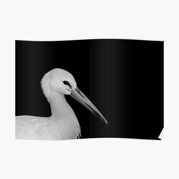 White Stork Poster