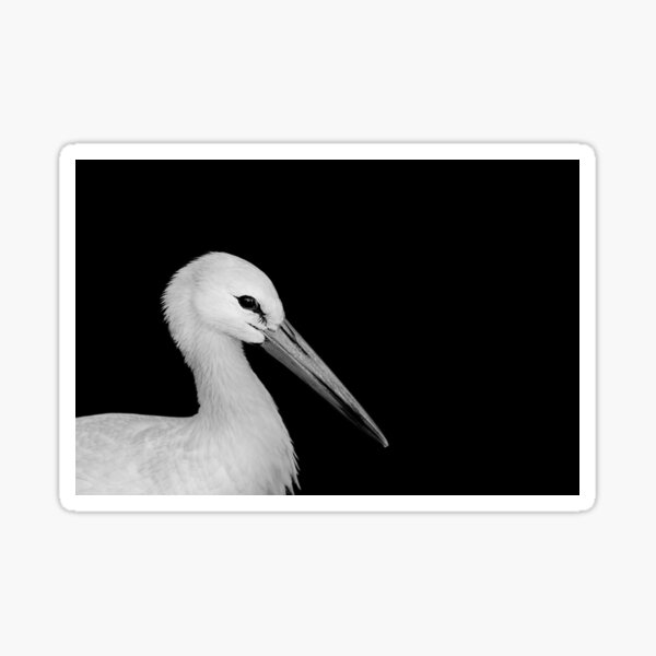 White Stork Sticker