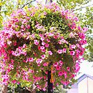 The Hanging Pretty Pink.. by Arvind Singh
