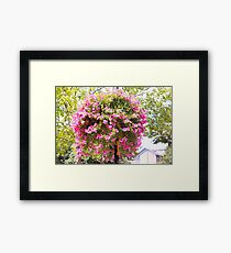 The Hanging Pretty Pink.. Framed Print