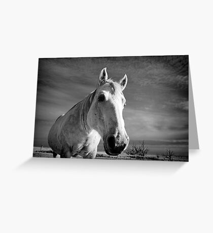 Our Mare Stormy Greeting Card