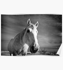 Our Mare Stormy Poster