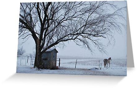 Horse in Snowy Prairie Landscape by Suz Garten