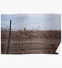 Meadowlark on Fence Poster