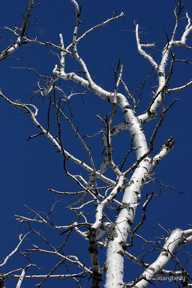 Dead Birch 2 by marybedy