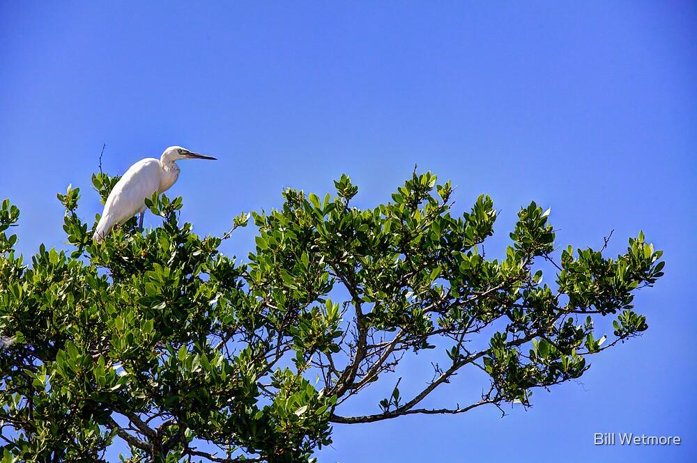 Heron in Tree by Bill Wetmore