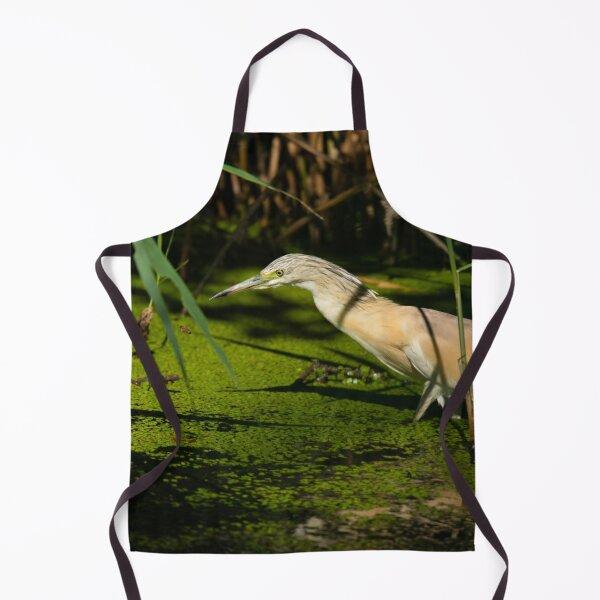 Squacco Heron prowling the waters Apron