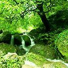 Nature by Dr. Harmeet Singh