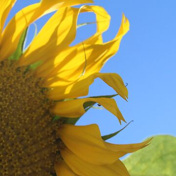 Sunflower Happiness by Dee2west