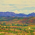 The Flinders Ranges in Bloom by Ronald Rockman