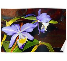 Pond orchids Poster