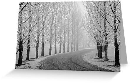 Barren Trees in Winter by Photopa