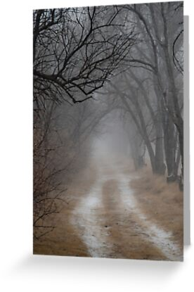 Dirt Road and Trees in the Fog by Photopa