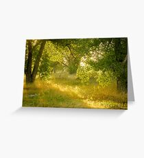 Trees Backlit by the Sun Greeting Card