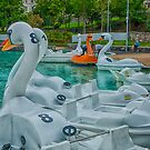 Plastic Swans by Adam Northam