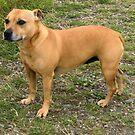 Brown Dog by the River von BlueMoonRose