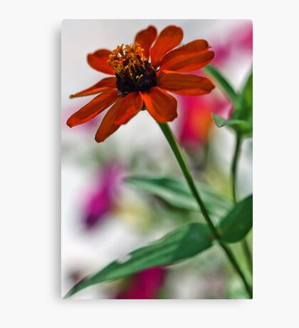 Profusion Orange Zinna with Pink Petunia Canvas Print