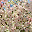 blossom confetti by Alison Hill