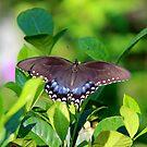Butterfly in splendor von Samohsong