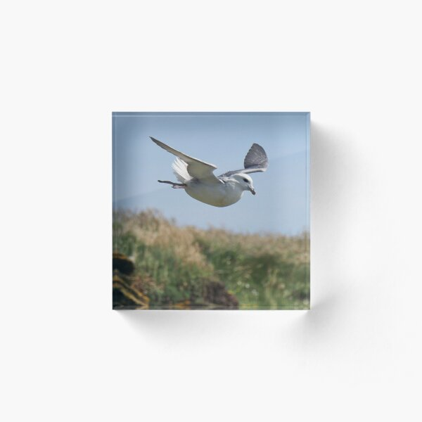 Bird in flight Acrylic Block