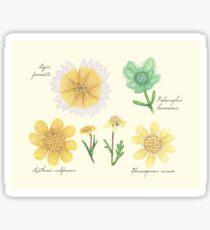 Asteraceae wildflowers Sticker