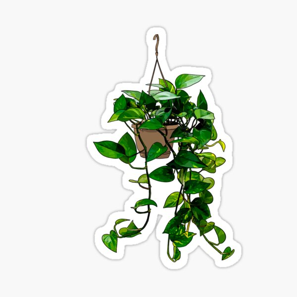 Hanging Pothos Plant Sticker