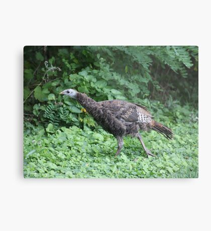 Milwaukee Wild Turkey Metal Print