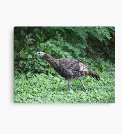 Milwaukee Wild Turkey Canvas Print