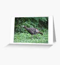 Milwaukee Wild Turkey Greeting Card