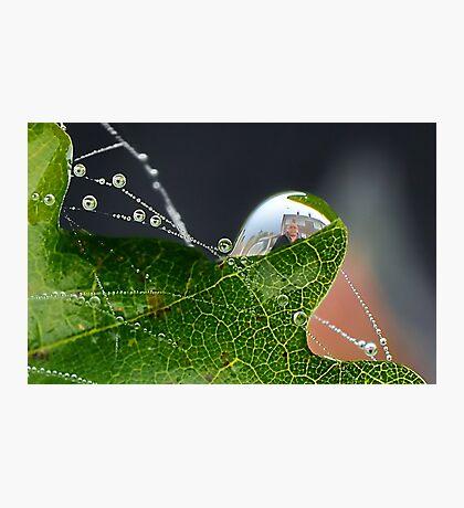 Dew Drop Fun   [please view larger ] Photographic Print
