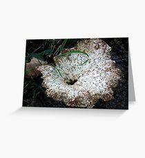 Large Fungi Greeting Card